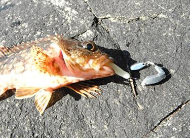ブレードボンバー魚イメージ