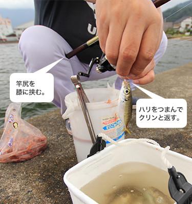 魚をサビキ仕掛から外す