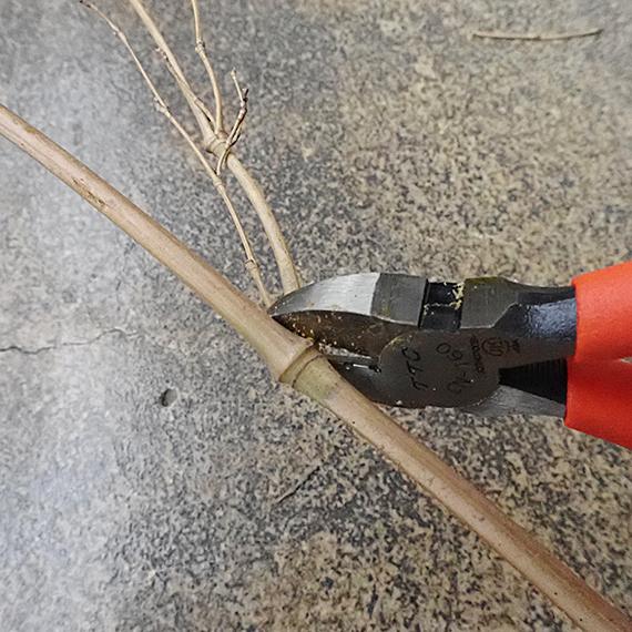 不要な枝をカット