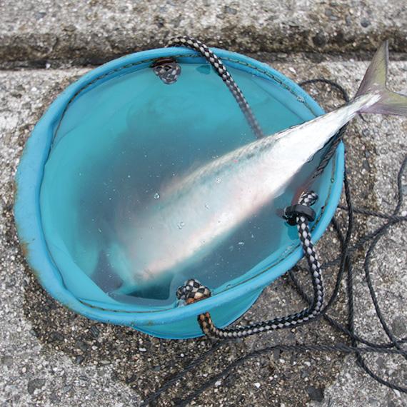 海水を張ったバケツ