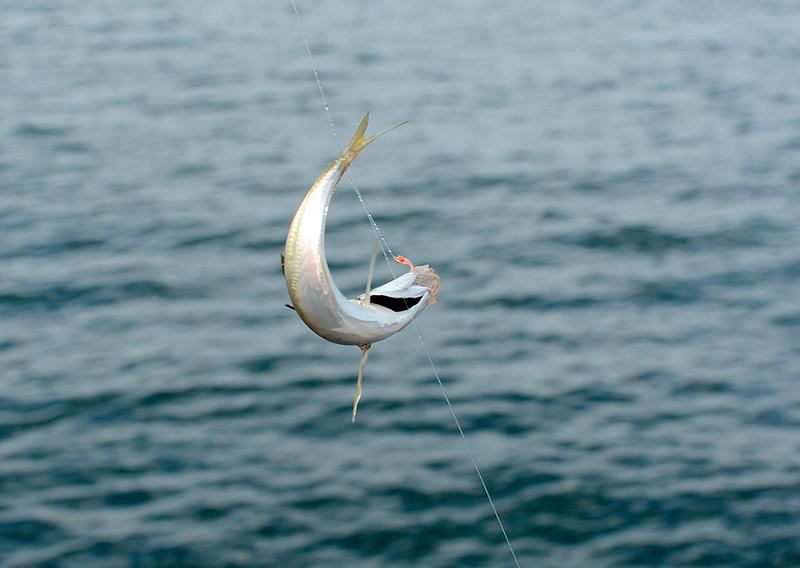 さあいよいよ釣ってみよう!