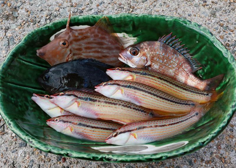 11_今日の食材となる魚たち