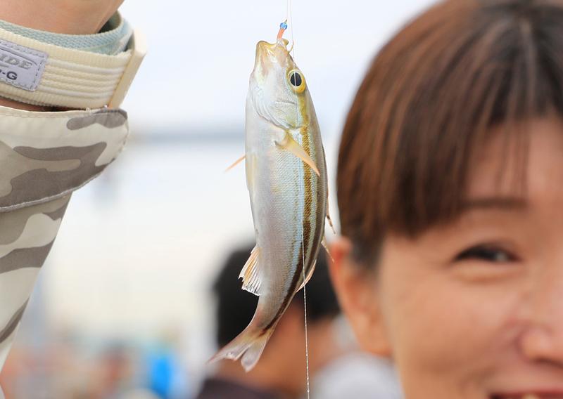 イサキの幼魚