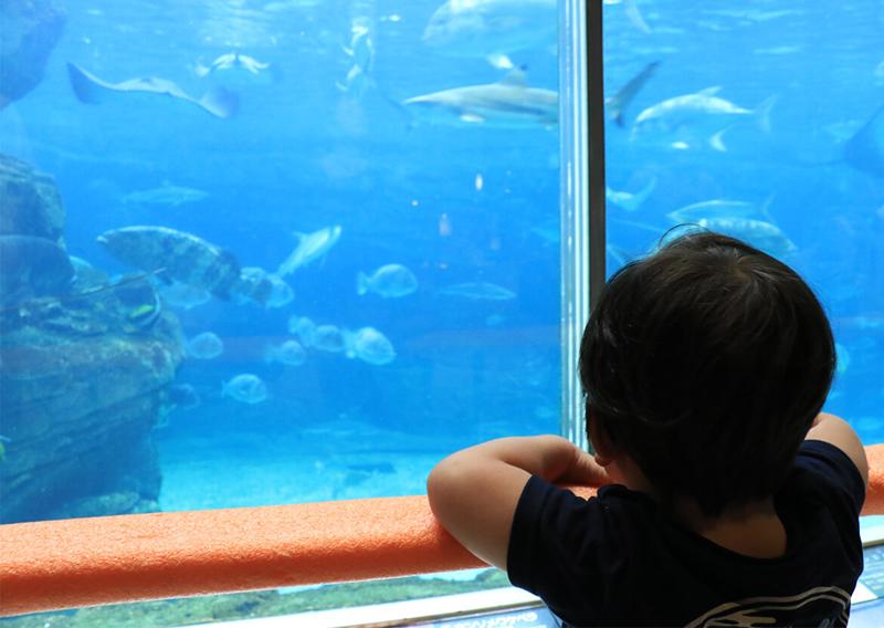 01_水槽越しに眺める子ども