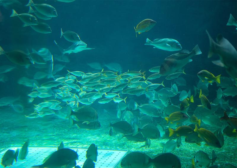 03_水槽内の魚の群れ