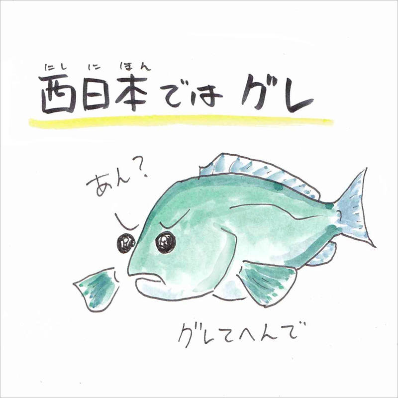 02_西日本ではグレ
