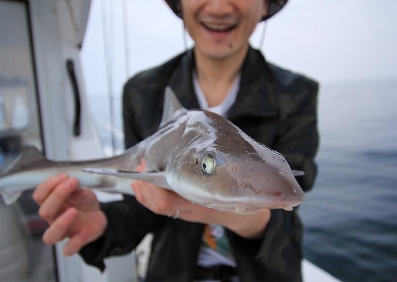27_ホシザメ釣果 岸本くん