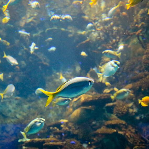 kaiyukan_04_グレートバリアリーフの魚
