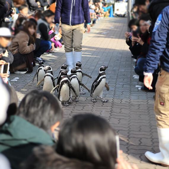 sumasui_03_ペンギンの散歩