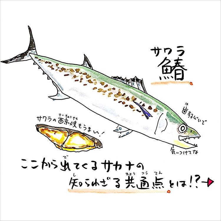 01_魚へんに春と書いて鰆
