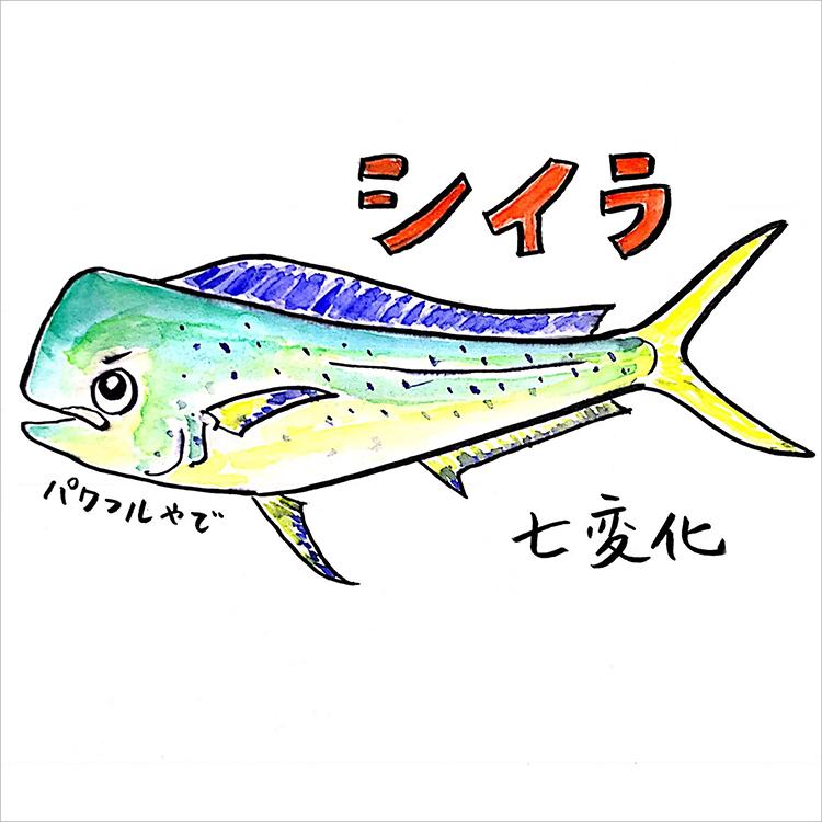 01_シイラ七変化