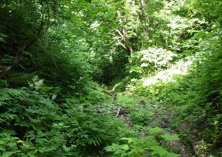 02_ IMG_6886 まるでジャングル