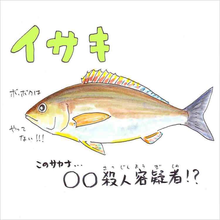 01_イサキ