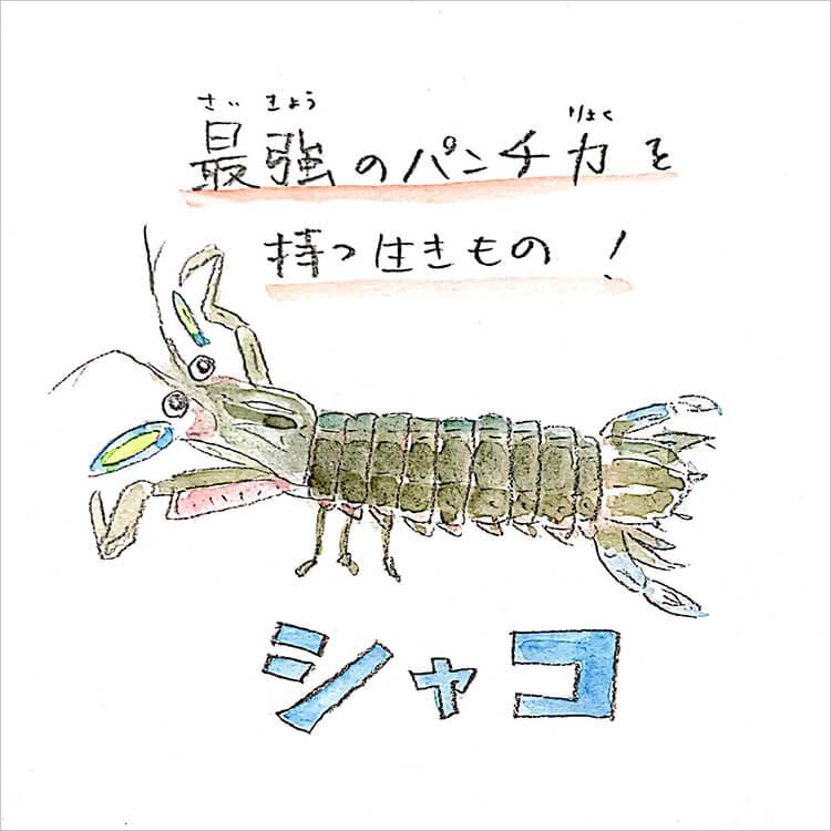 01_シャコ