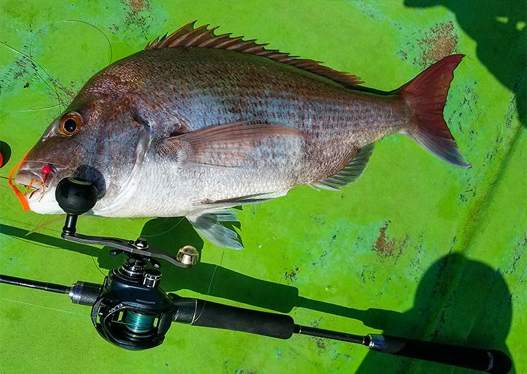 16_魚のアベレージサイズは瀬戸内に似ている