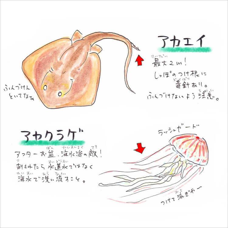 03_アカエイ・アカクラゲ