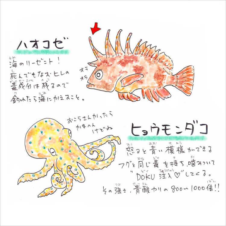 04_ハオコゼ・ヒョウモンダコ