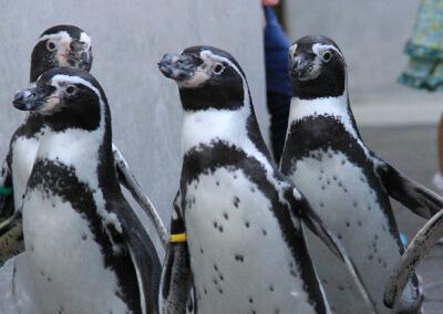 08_ IMG_1701 ペンギンの散歩