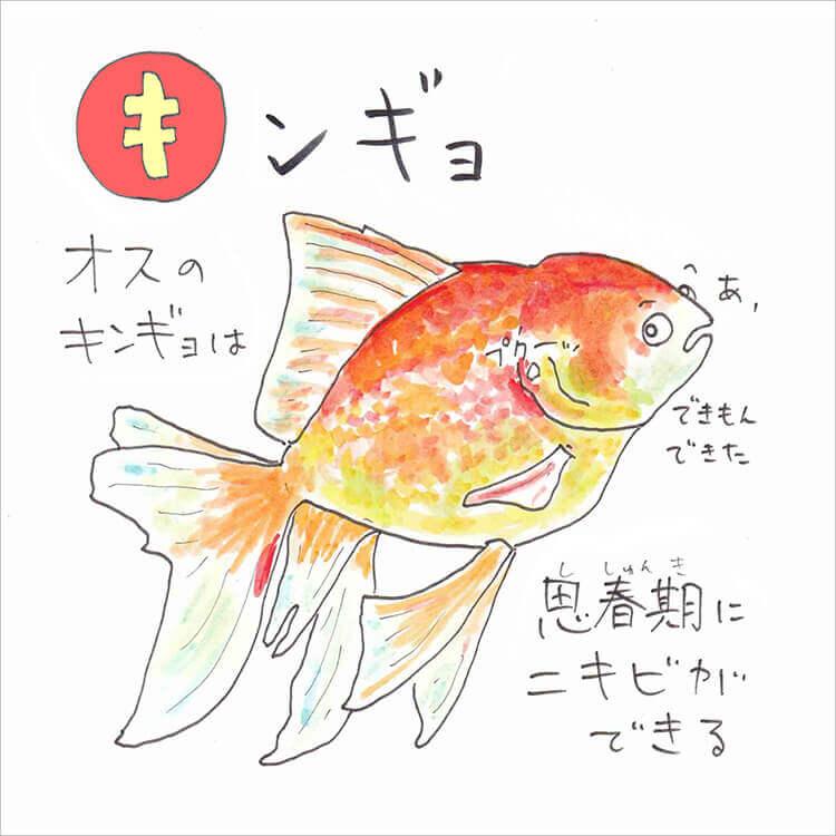02_2 キンギョ