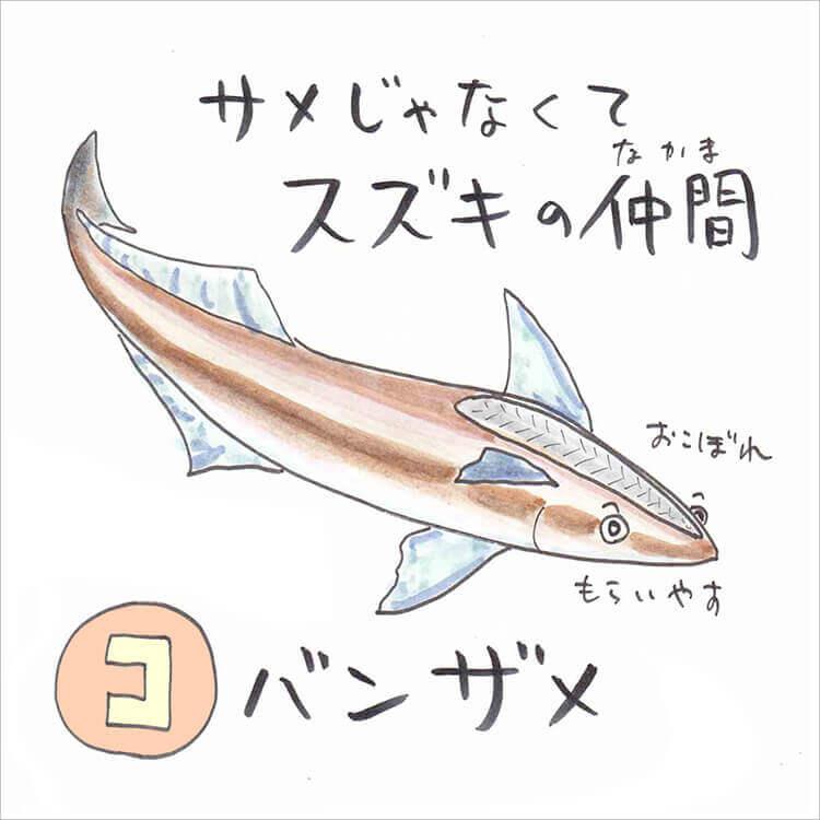 02_5 コバンザメ