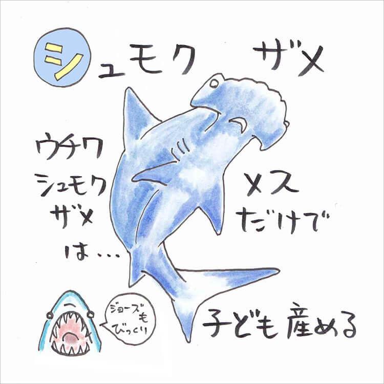 03_2 シュモクザメ