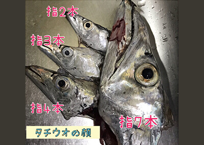 02_ タチウオの顔のサイズ比較