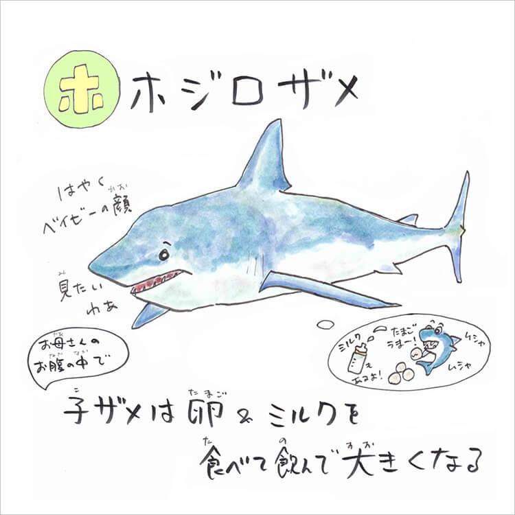 02_5 ホホジロザメ
