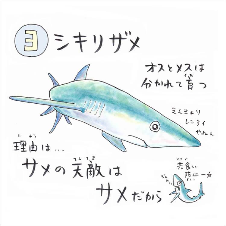 04_3 ヨシキリザメ