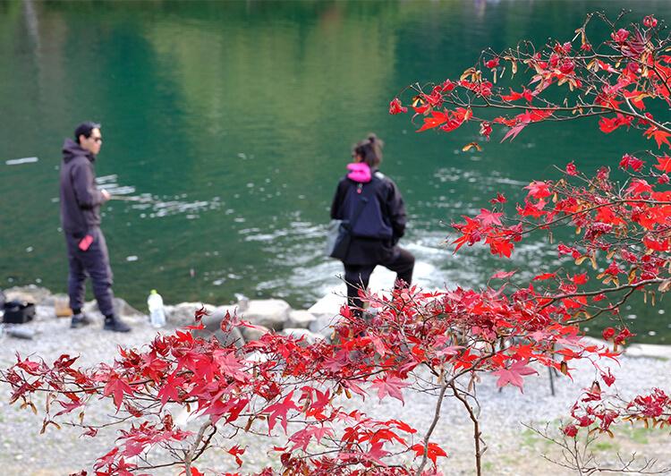 11 紅葉と管釣り