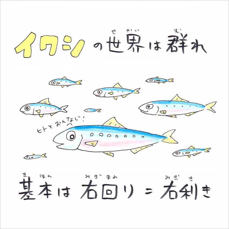 01_3 イワシ