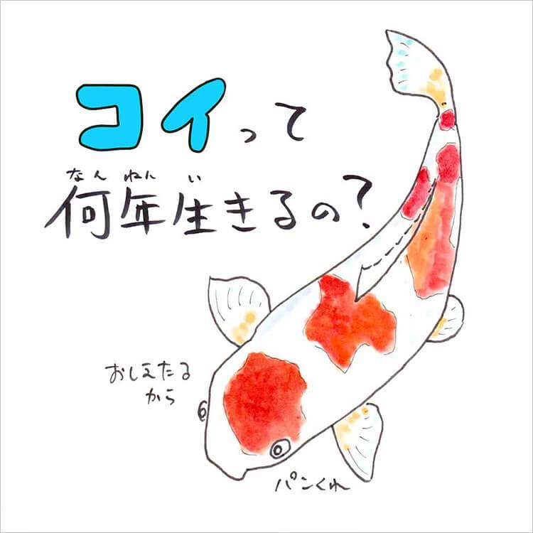 01_5 コイ