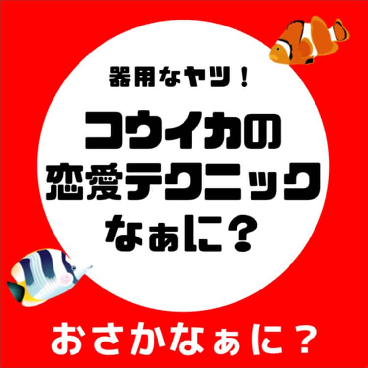 04_1-1 コウイカ問題