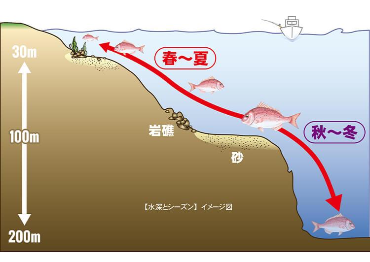 08_イラスト-鯛生息水深.jpg タイの生息する水深