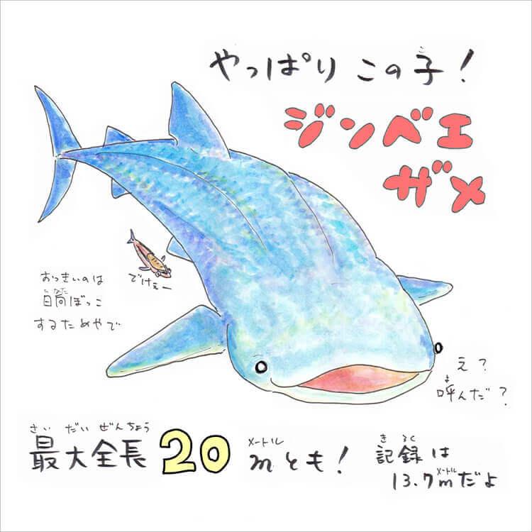 512 歳 の サメ