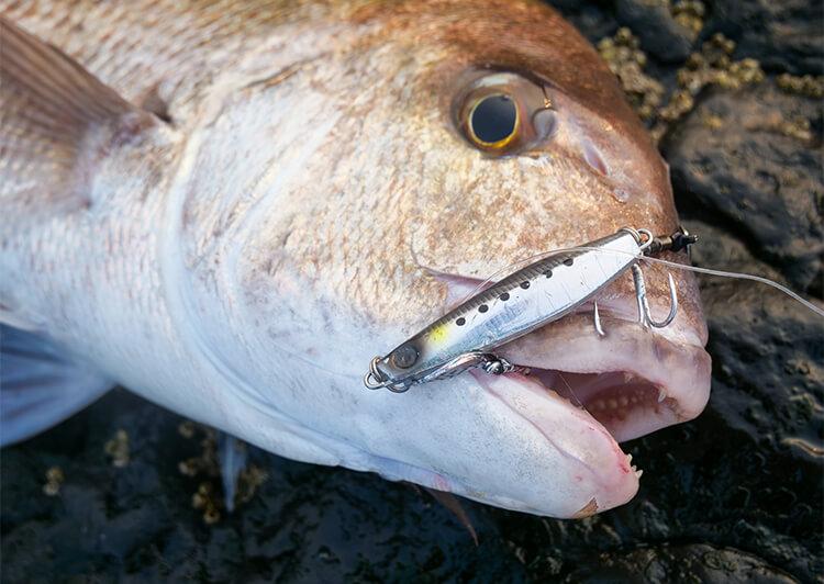 28_ 魚の口に掛かったフック