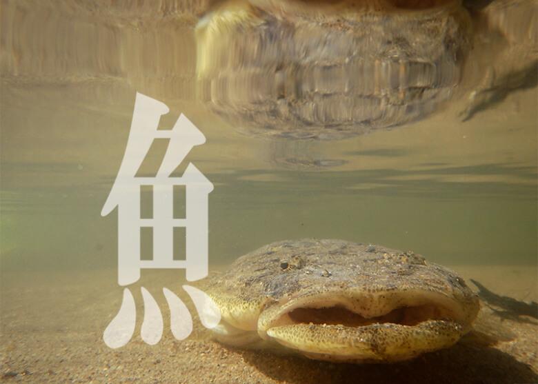 魚へんの漢字_text-photo_岳原雅浩