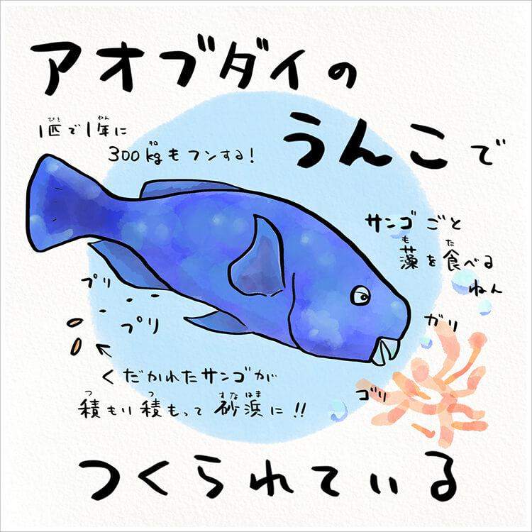 02_4 アオブダイのうんこ