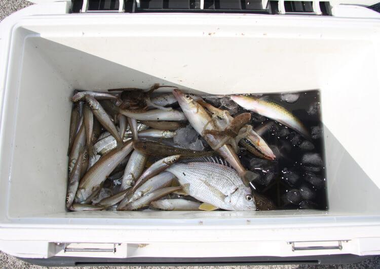 クーラー内の魚