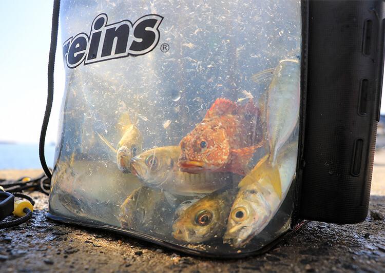 13_ IMG_1165_2020 水汲みバケツの中の魚