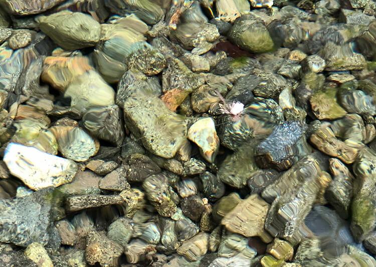 09_水面のテンカラ