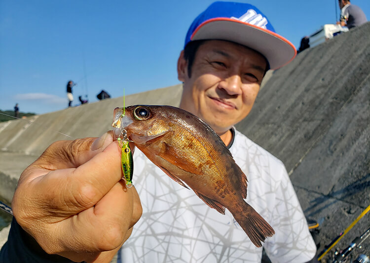 03_ 井上さんメバル釣果