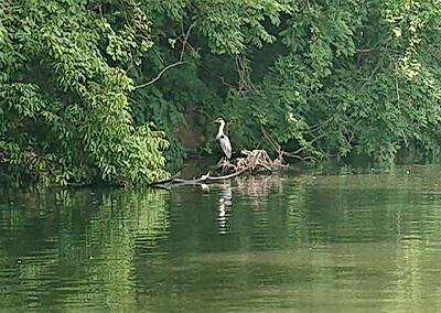 04_ 湖面の鳥