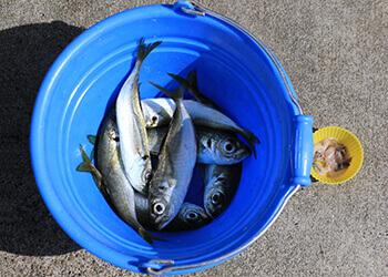 14_釣って食べれる水族館?? 見て、さわれる、城崎マリンワールドでアジ釣り体験!!
