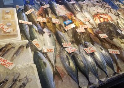 11_ たくさんの種類の魚